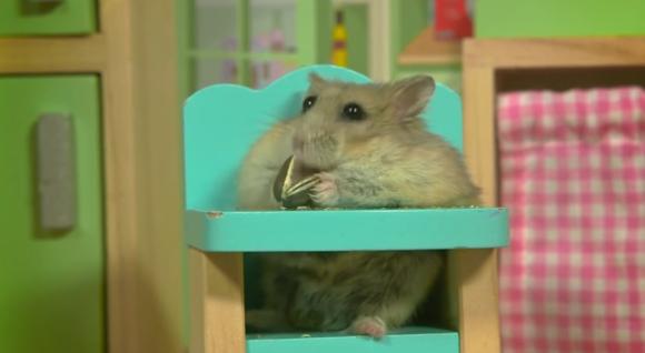 這隻倉鼠好像不知道自己住的地方多豪華