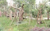 想要一圓逛遍世界各地的動物園的夢想? Google Street View 幫你實現