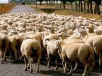 【MR JAMIE專欄】羊群效應 ─ 他人的讚會讓我們更想按讚