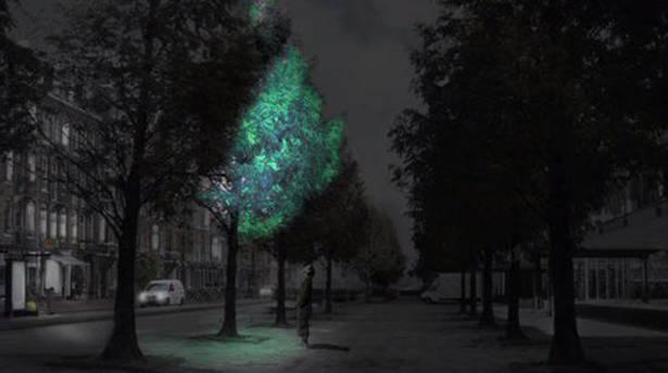 荷蘭研發發光植物取代街燈