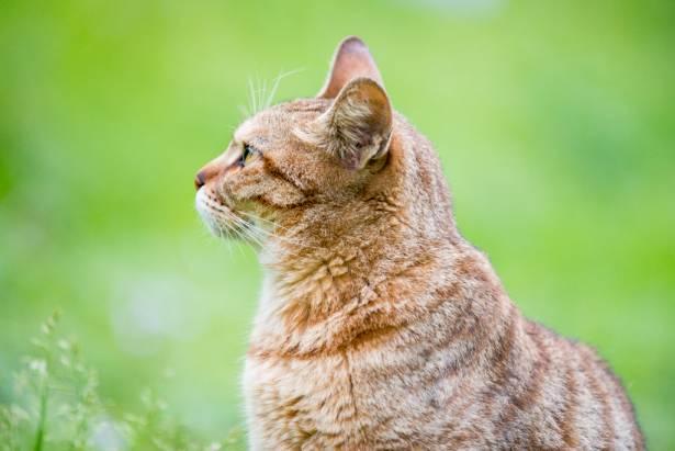 [攝影小教室] 貓毛看起來根根分明超清晰?到底我該從清晰度調整還是從細節銳利化處理呢?