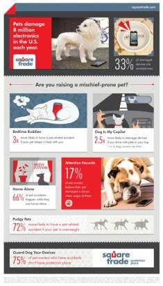 [科技新報]美國一年遭貓狗破壞的3C產品總額達30億美元