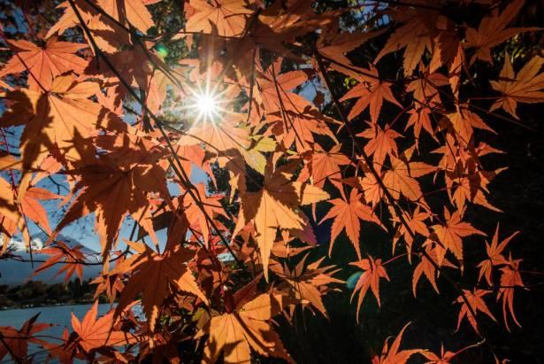 [旅遊攝影王] 拍出令人驚歎的富士山景!(河口湖篇、空拍篇)