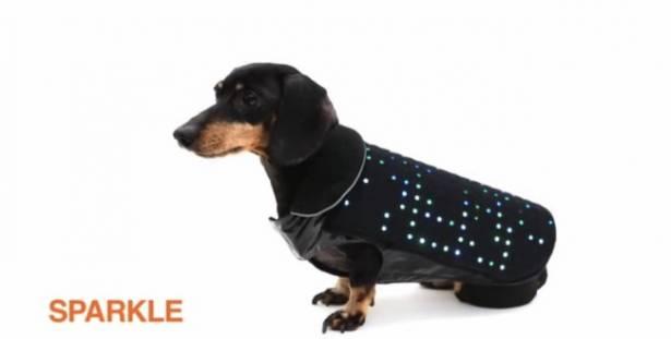 越夜遛狗越讚!狗狗穿的 LED 閃閃背心