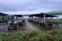 牛乳與鮮乳差很多沒錯,但就算是鮮乳也還是有我們所不知道的灰色地帶