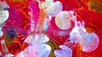 在墨田水族館遇到蜷川實花,超美的水母萬花筒隧道
