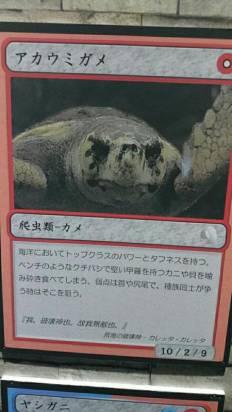 我覆蓋這張「大王具足蟲」結束這回合!日本水族館創意怪獸卡