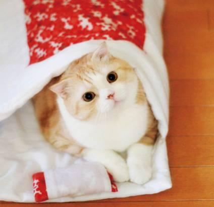 日式貓咪睡袋!貓迷們肯定忍不住取出相機連環快拍吧(笑)