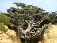 【超勵志】在嚴峻環境下也能生長的老樹