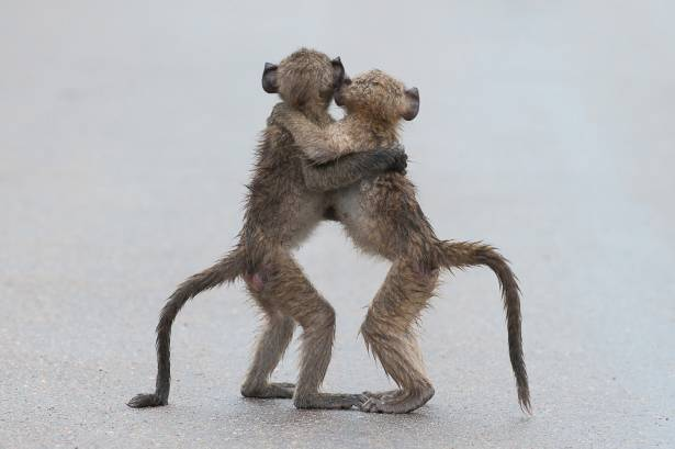 哈哈哈!第一屆喜劇版野生動物攝影獎