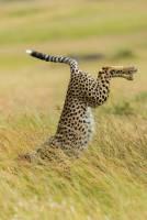 滑稽野生動物的瞬間