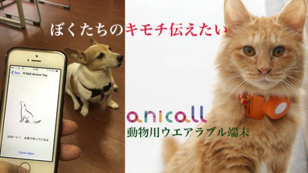今日新聞淺談:好想知道他在想什麼...,貓狗讀心術腰帶