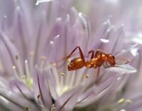 史丹佛教授:你知道小小的螞蟻教了我們哪些網路經營的大學問嗎?