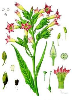 改變世界歷史,並扭轉近代文明的六種植物