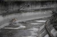 被囚的野性︰拍攝園內動物的另一面