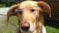 Google Glass不同視角的應用,讓狗狗戴上去來看不同的視界觀
