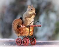 富有吸引力且豐富情境想像的松鼠照